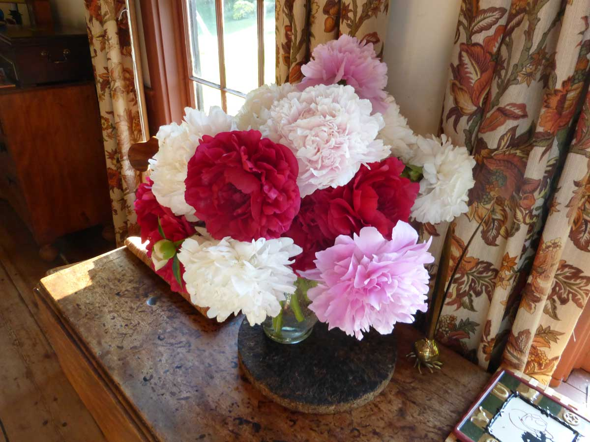 Hybrid peonies from the cutting garden
