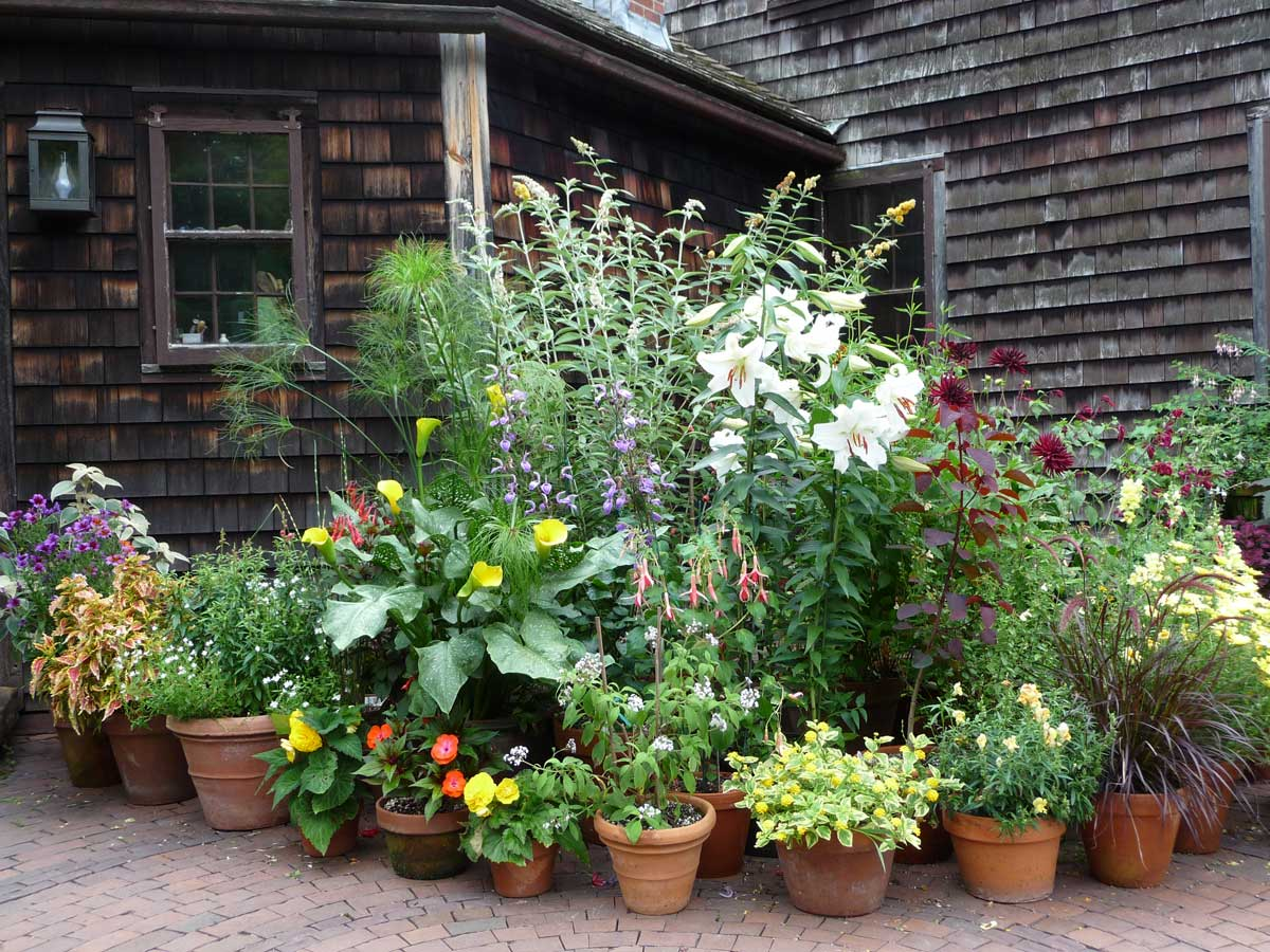 annual containers on the terrace
