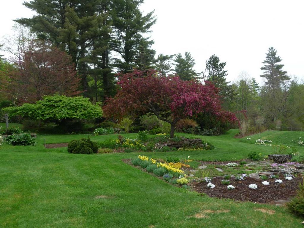Fagus, Malus, and old foundation garden looking east