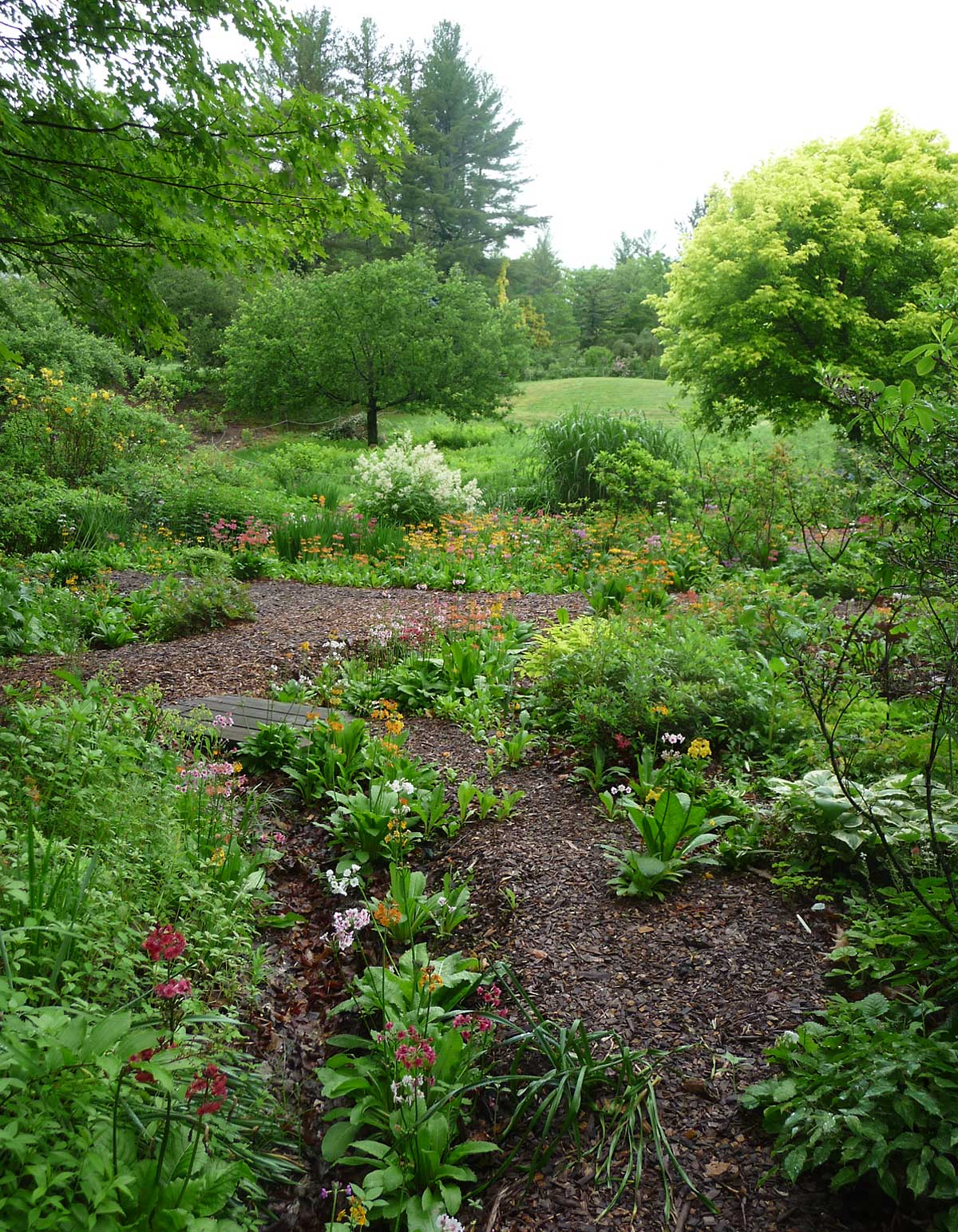Lower garden with Asiatic primulas