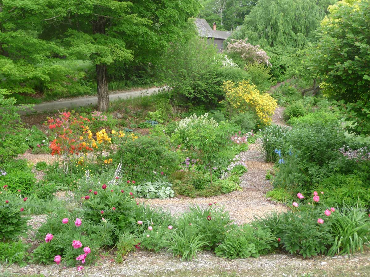 Lower garden with Azaleas and peonies