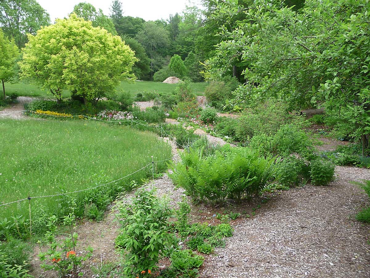 Lower garden with Acer negundo 'Kelly Gold' on left