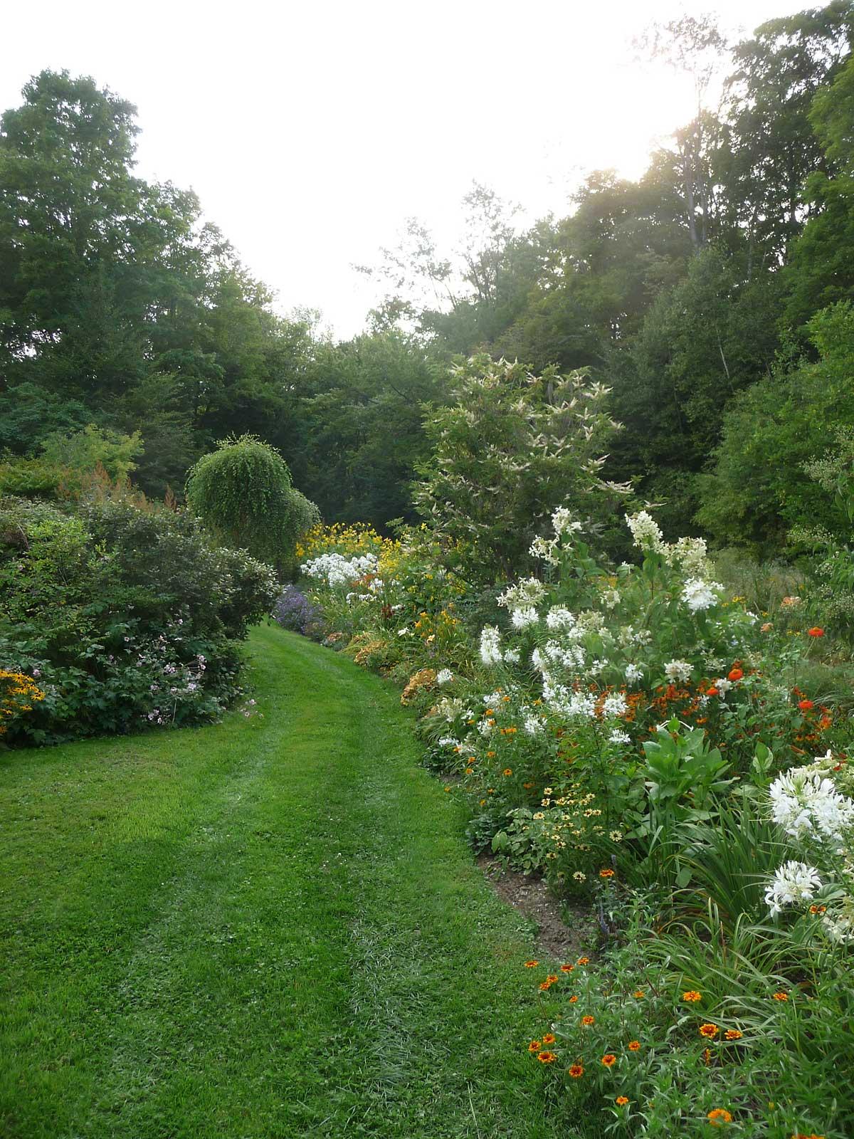 West lower garden with Hydrangeas, Phlox, and Hemerocallis