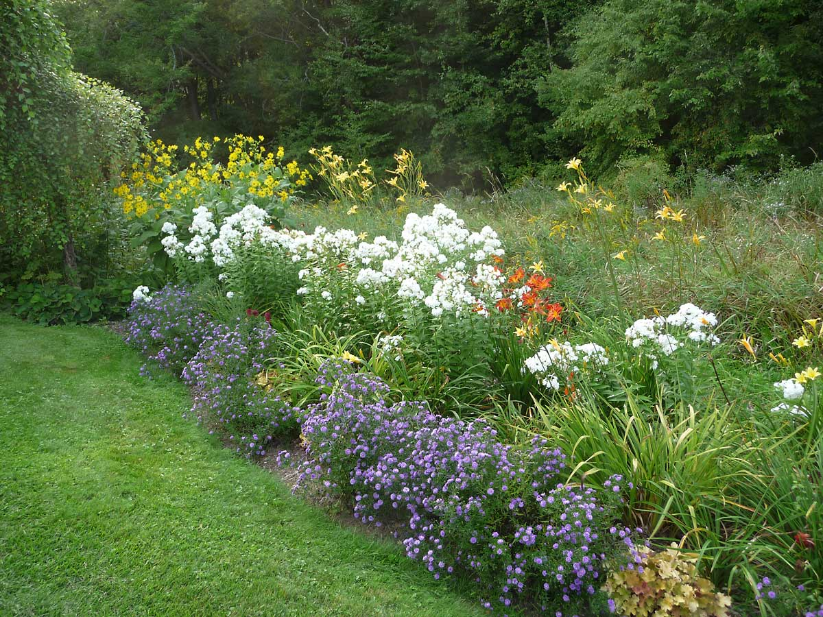 west lower garden with Phlox 'David', Hemerocallis and Asters