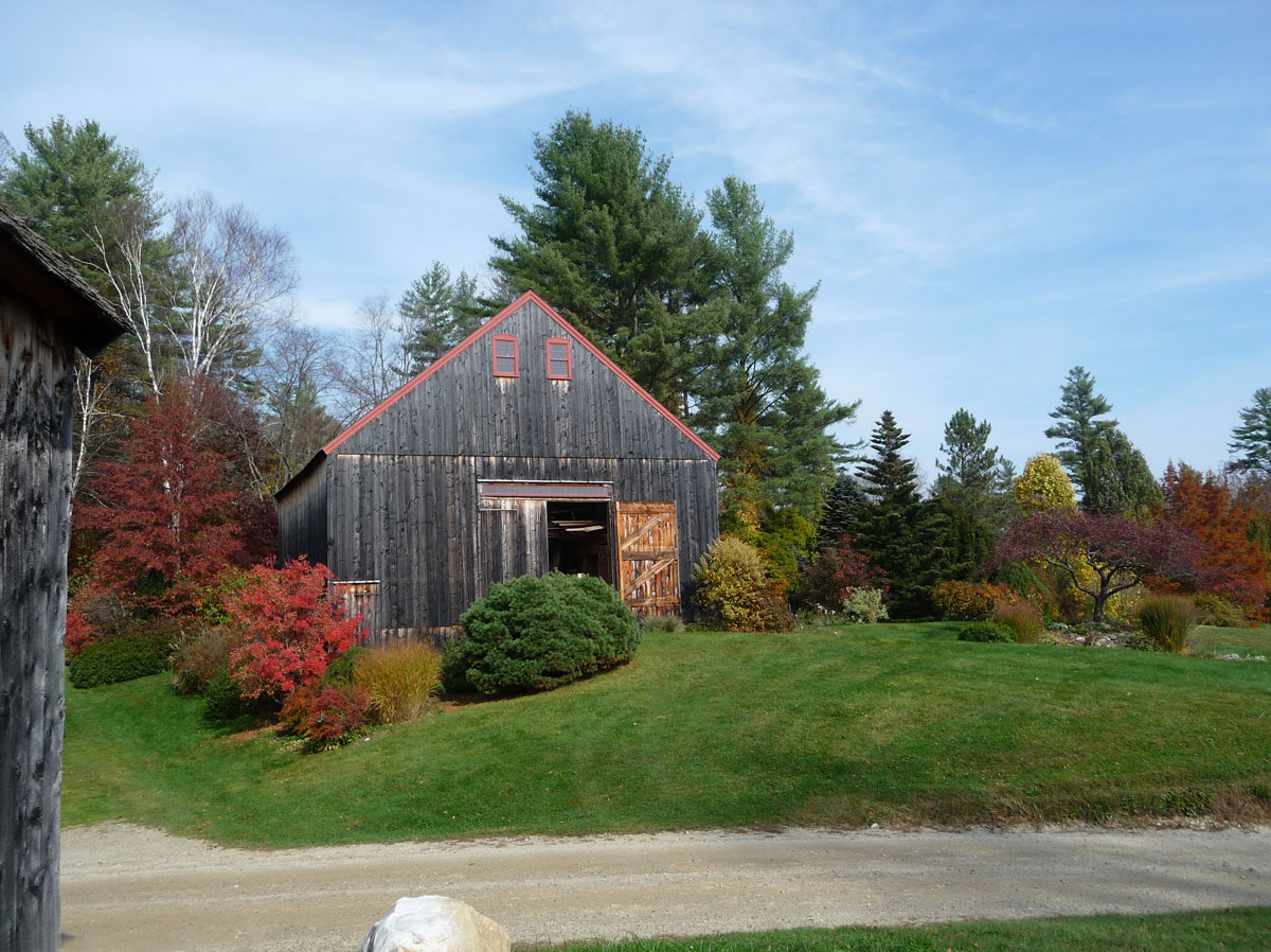 1836 barn with fall foliage (Enkianthus campanulatus in foreground)
